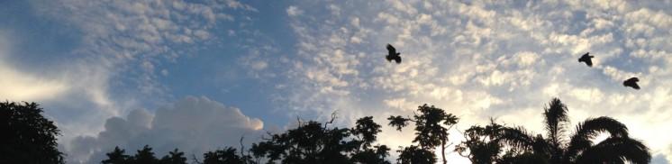 parrots of Belleville