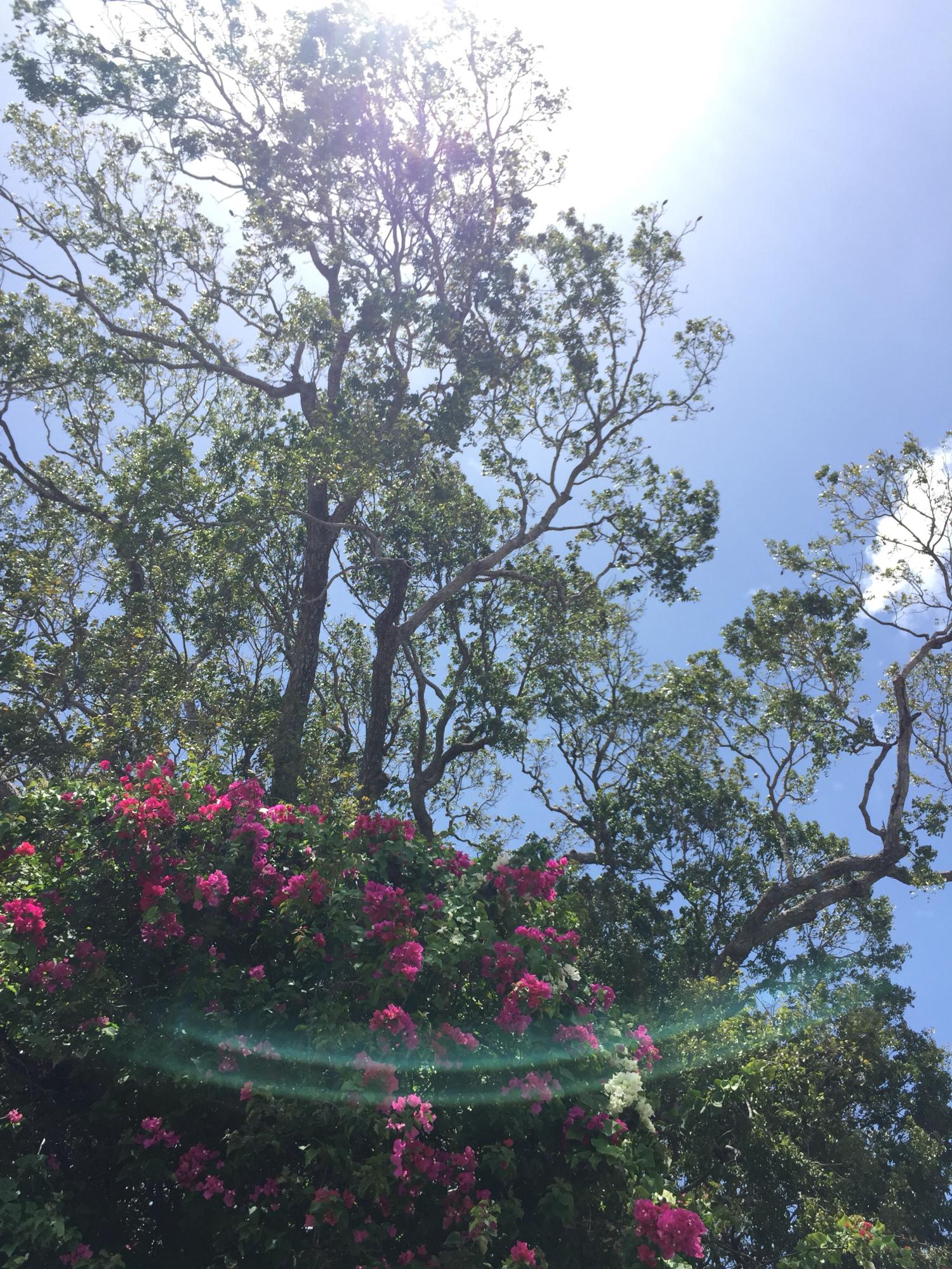 treeinlight